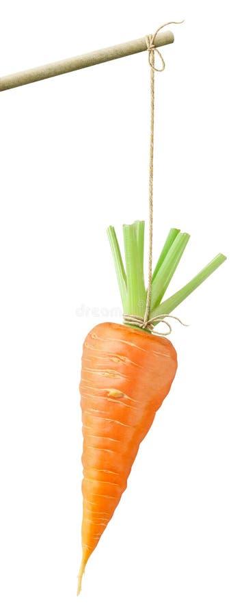 Zanahoria en una cadena imagen de archivo libre de regalías
