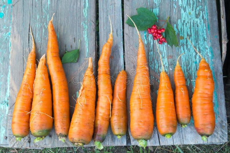 Zanahoria fresca en la granja del otoño fotografía de archivo libre de regalías