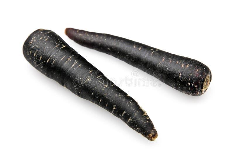 Zanahoria negra, scortzonera fotografía de archivo