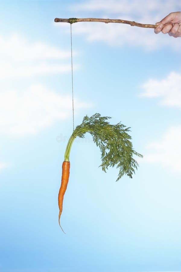 Zanahoria que cuelga del hombre del palillo fotografía de archivo libre de regalías