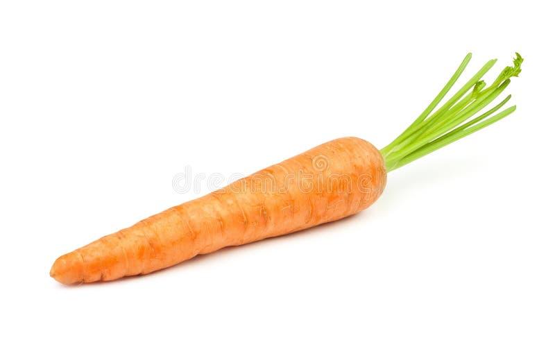 Zanahoria sola imagen de archivo libre de regalías