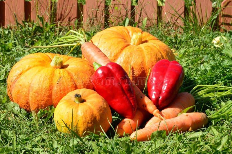 Zanahoria y pimienta de Pumprin imágenes de archivo libres de regalías
