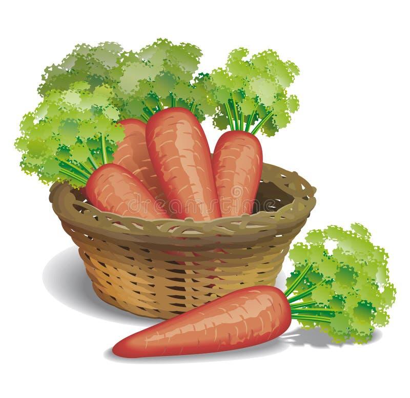 Zanahorias ilustración del vector