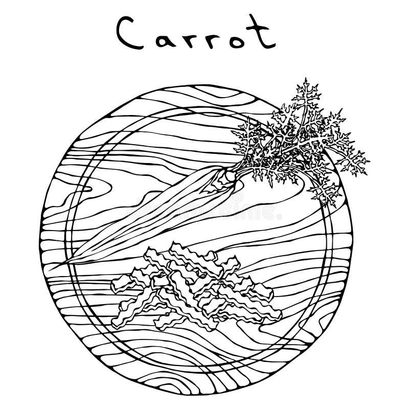 Zanahorias anaranjadas frescas con las hojas en rebanadas de un tablero de madera del corte y de la forma de onda Vehículos madur ilustración del vector