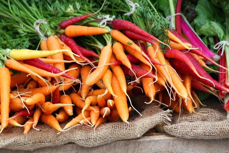 Zanahorias coloridas imagenes de archivo