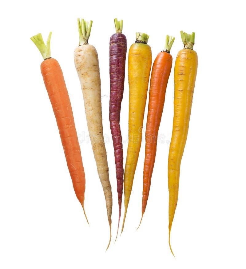 Zanahorias coloridas del arco iris en el fondo blanco foto de archivo libre de regalías