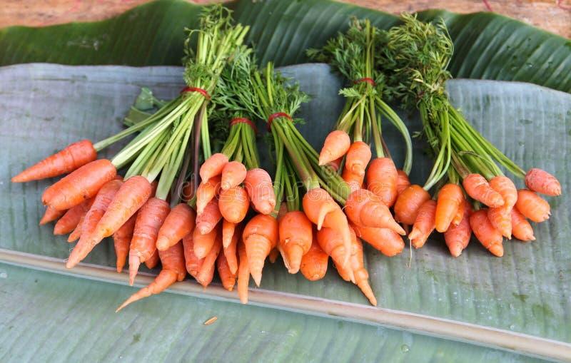 Zanahorias de bebé aisladas fotografía de archivo libre de regalías