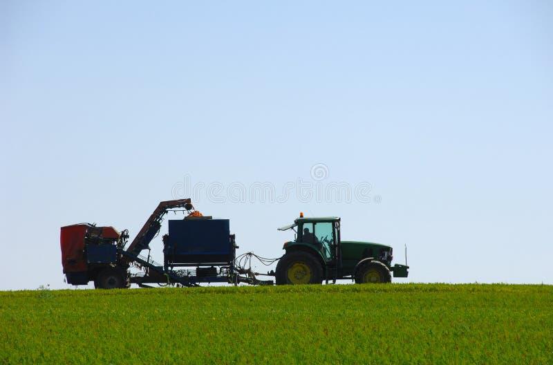 Zanahorias de la cosecha mecanizada en campo verde imagen de archivo libre de regalías