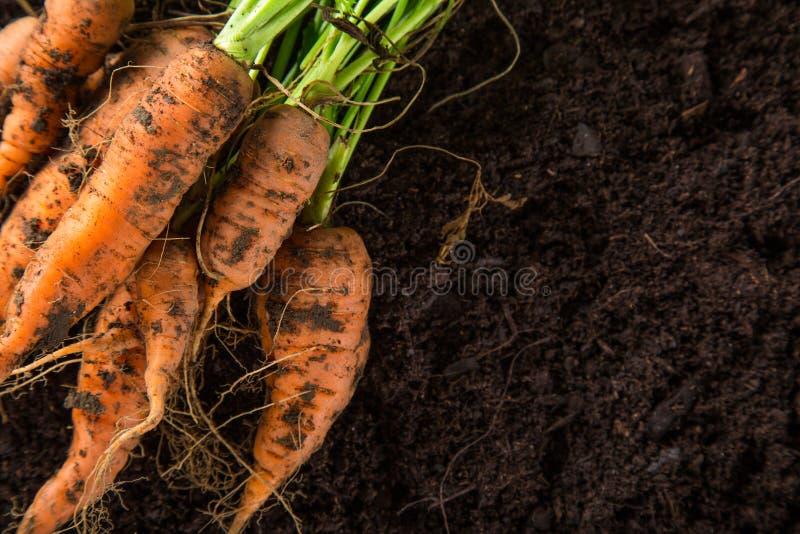 Zanahorias en el jardín foto de archivo libre de regalías