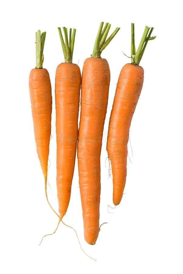Zanahorias frescas en blanco imagen de archivo libre de regalías