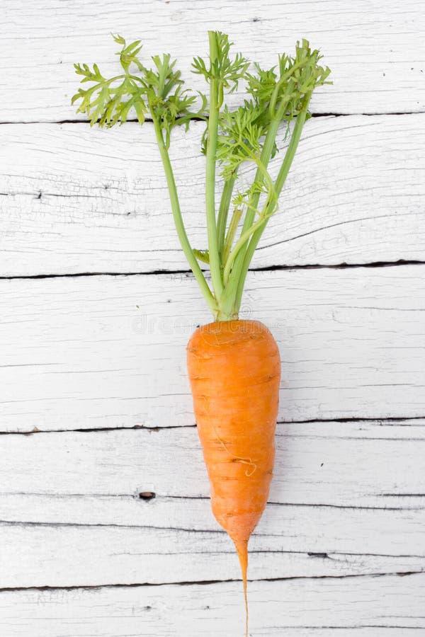 Zanahorias orgánicas frescas fotos de archivo libres de regalías