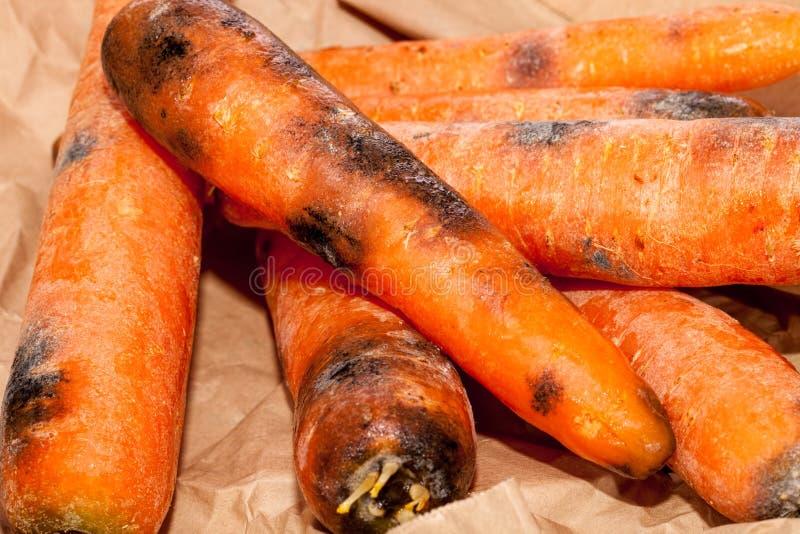 Zanahorias putrefactas Basura vegetal mohosa estropeada Comida perdida en primer imagenes de archivo