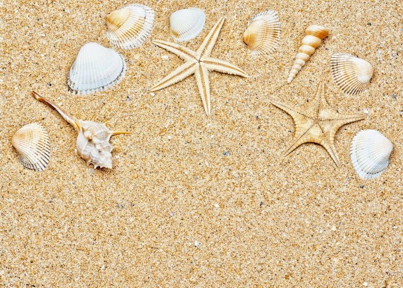 Zand en overzees shells kader stock afbeelding
