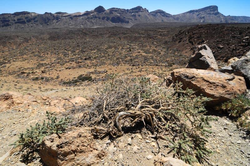 Zand en Rotsenwoestijn stock afbeeldingen
