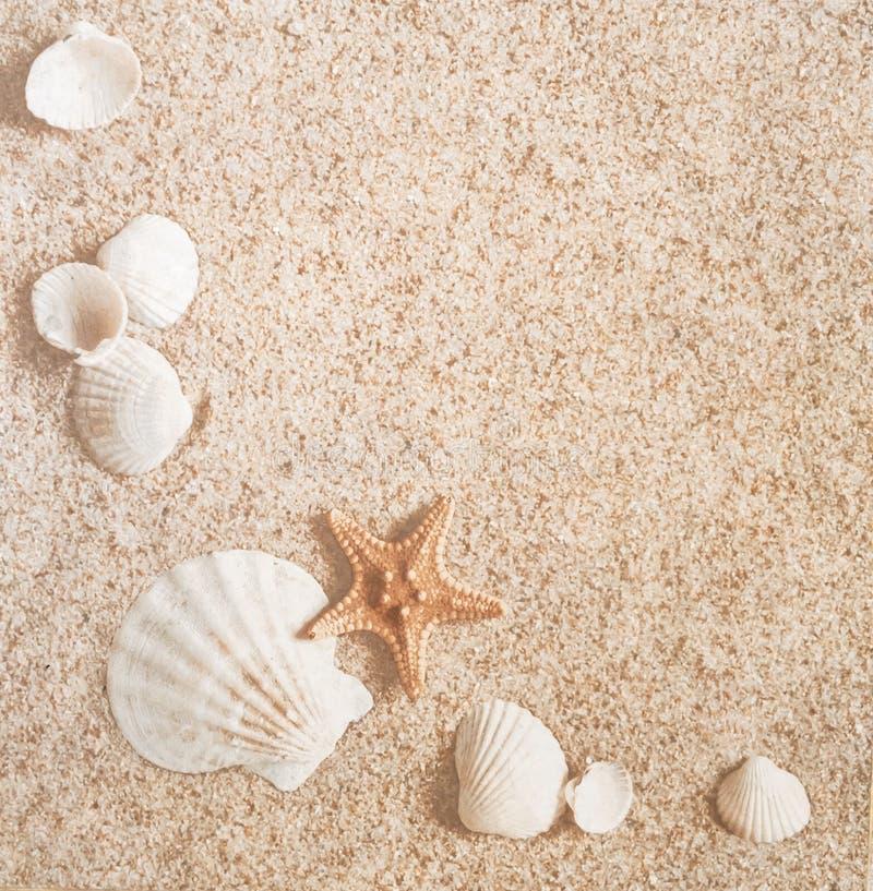Zand en shells stock fotografie