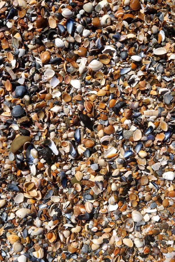 Zand en shells op het strand stock foto