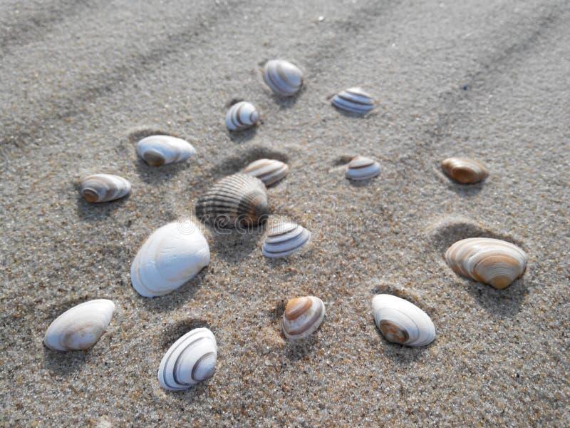 Zand en zeeschelpen, Noordelijke Overzees, Nederland stock afbeeldingen