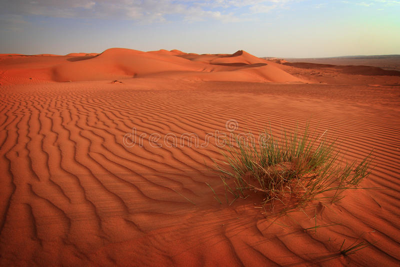 Zand I van Wahiba royalty-vrije stock fotografie