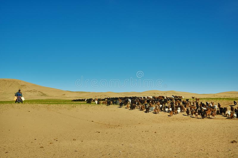Zand Mongol Els royalty-vrije stock foto