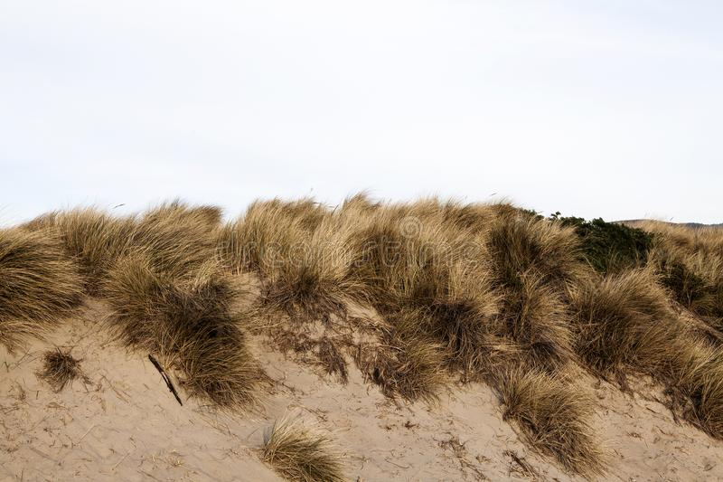 Zandduin met Geel Gras en Donkere Hemel royalty-vrije stock foto's