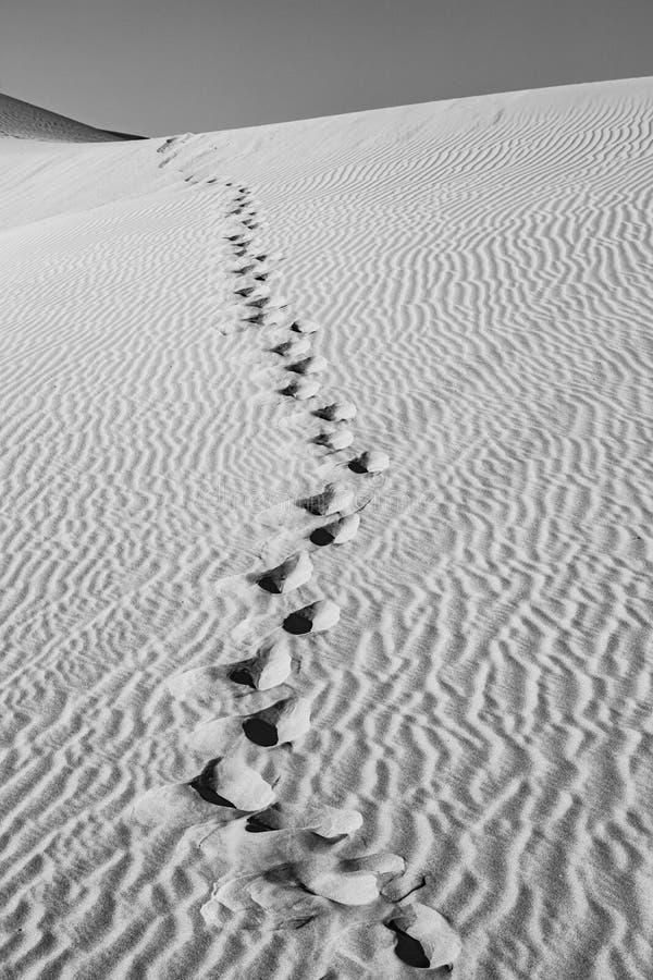 Zandduin in zonsopgang in de sonoranwoestijn met menselijke voetstappen in het zand royalty-vrije stock foto