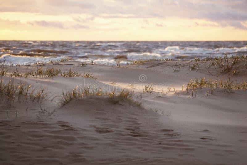 Zandduinen in avondzonlicht stock afbeelding