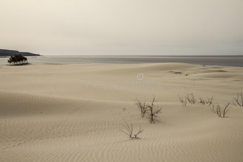 Zandduinen die vormt een maanlandschap met grijze overzees en loden de winterhemel geschetst zijn stock fotografie