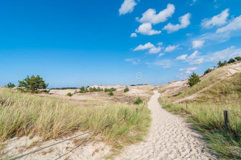 Zandduinen en de Achtergrond van de Grasvegetatie stock foto's
