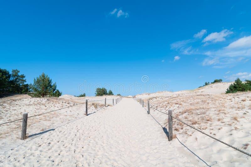 Zandduinen en de Achtergrond van de Grasvegetatie royalty-vrije stock afbeeldingen