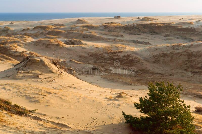 Zandduinen en heuvels van de Baltische kust, de duinen van het landschapszand, royalty-vrije stock foto