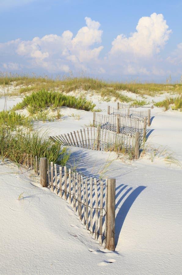 Zandduinen en Overzeese Haver op een Oorspronkelijk Strand van Florida stock foto