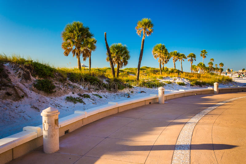 Zandduinen en palmen langs een weg in Clearwater-Strand, Flor stock foto's