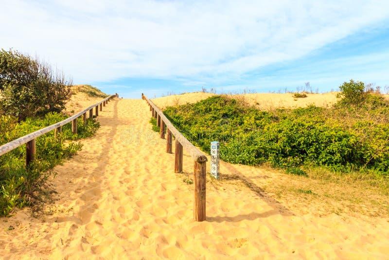 Zandduinen, het strand van de Krulkrul stock afbeeldingen