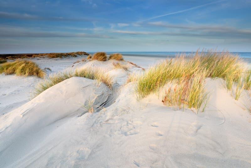 Zandduinen op het noordzeestrand op Schiermonnikoog royalty-vrije stock fotografie