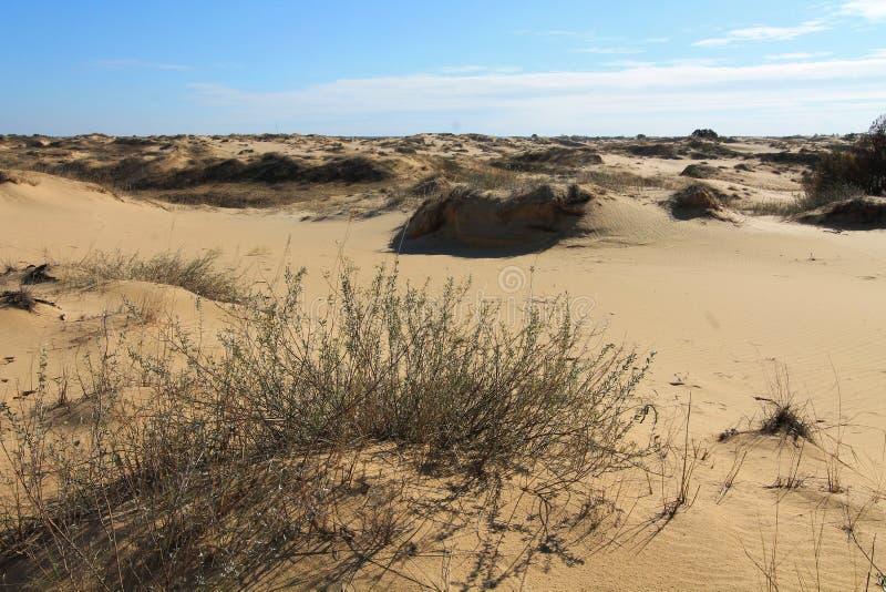 Zandduinen van de grootste woestijn van Europa ` s stock foto's