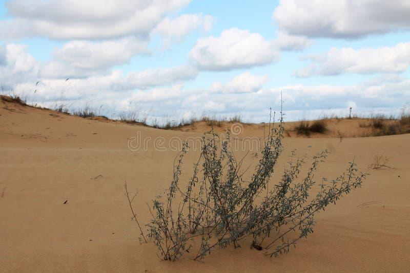 Zandduinen van de grootste woestijn van Europa ` s royalty-vrije stock afbeelding