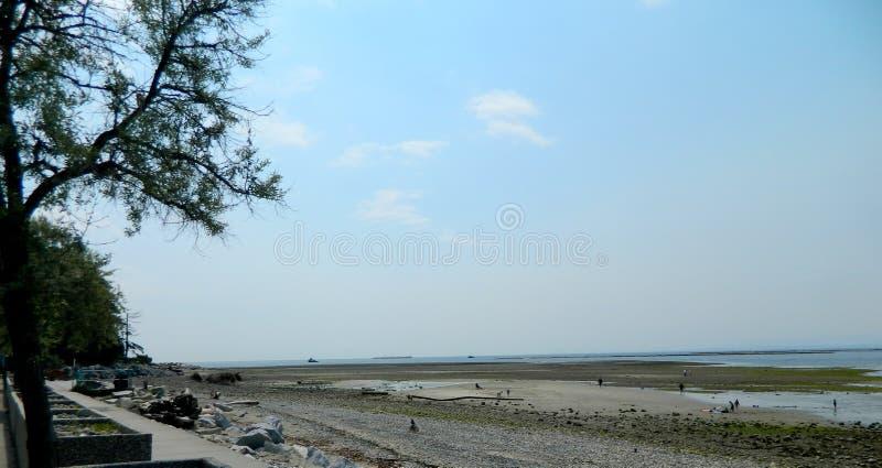Zandig strand in Davis Bay British Columbia stock afbeeldingen