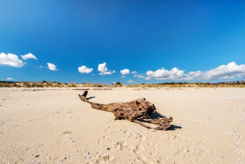 Zandig strand en gerot houten landschap stock foto's