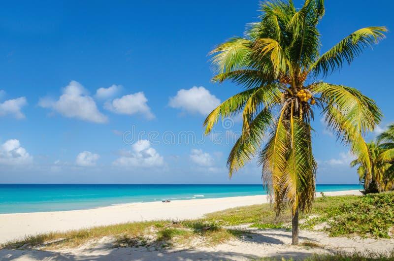 Zandig strand met Caraïbische kokosnotenpalm, royalty-vrije stock fotografie