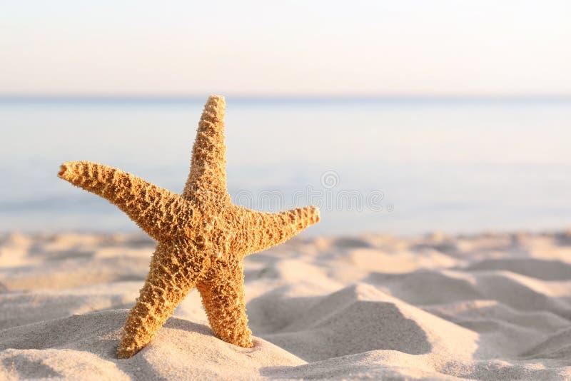 Zandig strand met mooie zeester dichtbij overzees op zonnige de zomerdag royalty-vrije stock afbeelding