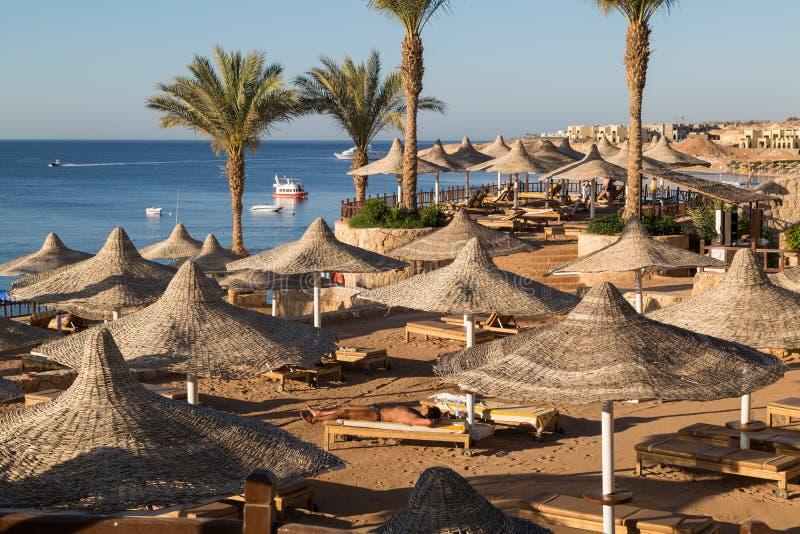 Zandig strand, sunbeds, paraplu's en warm water van Rode Overzees vroeg in de ochtend in de voorstad van Sharm el Sheikh stock foto's