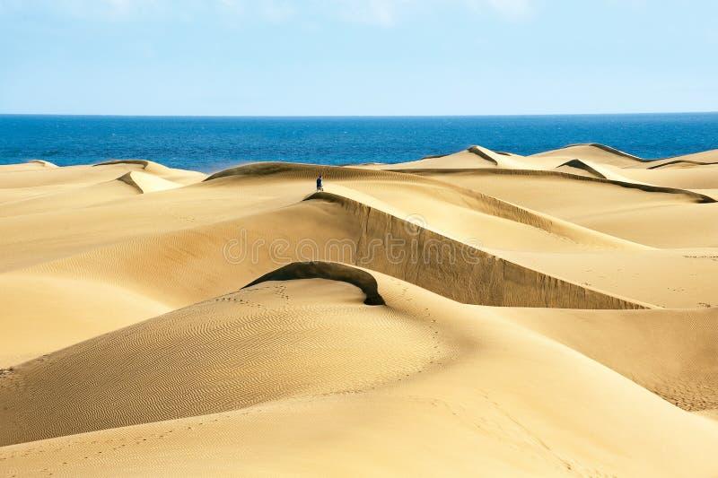 Zandige duinen stock afbeelding