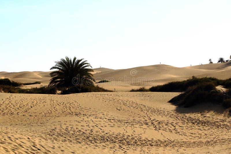 Zandige duinen in beroemd natuurlijk Maspalomas-strand Gran Canaria spanje stock foto