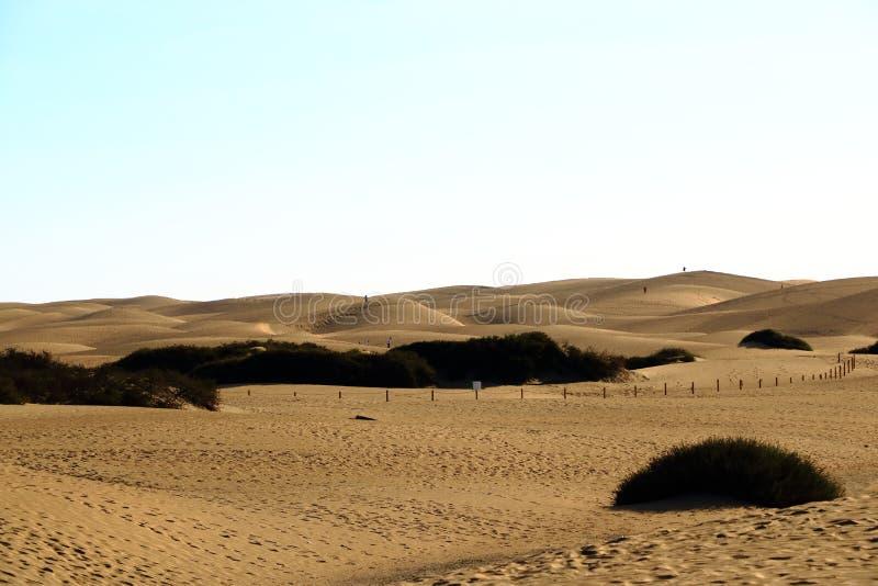 Zandige duinen in beroemd natuurlijk Maspalomas-strand Gran Canaria spanje stock foto's