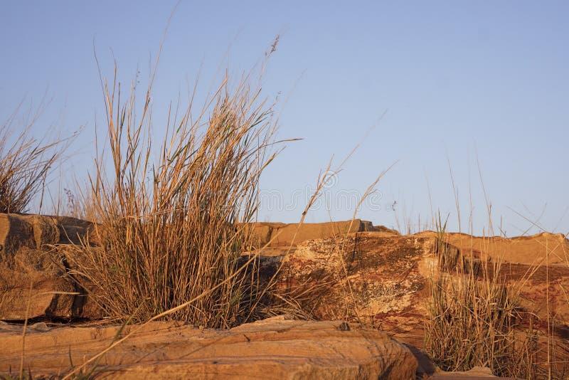 Zandsteenrotsen en grassen in gouden zonsonderganglicht stock foto's