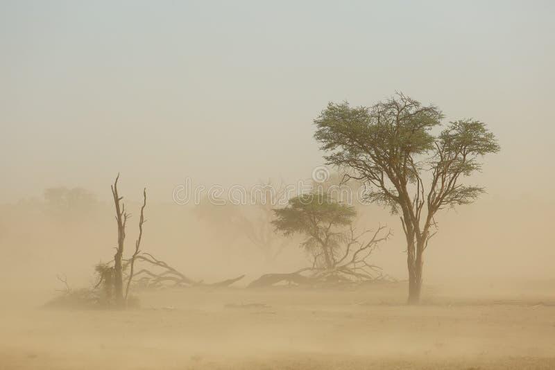 Zandstorm - de woestijn van Kalahari stock foto