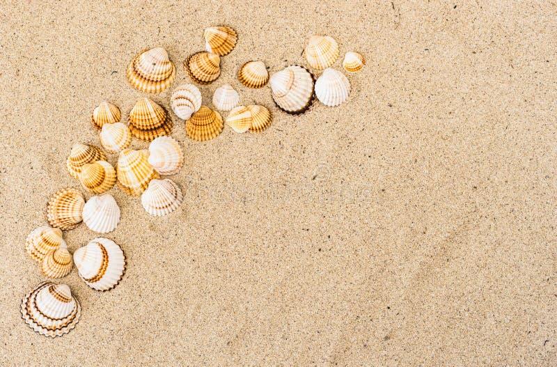 Zandstrand met zeeschelpen, de reisachtergrond van de de zomervakantie, stock fotografie