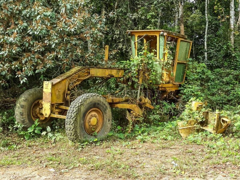 Zaniechana żółta równiarka przerastająca dżungli roślinnością blisko graniczy między Nigeria i Cameroon, Afryka obraz royalty free