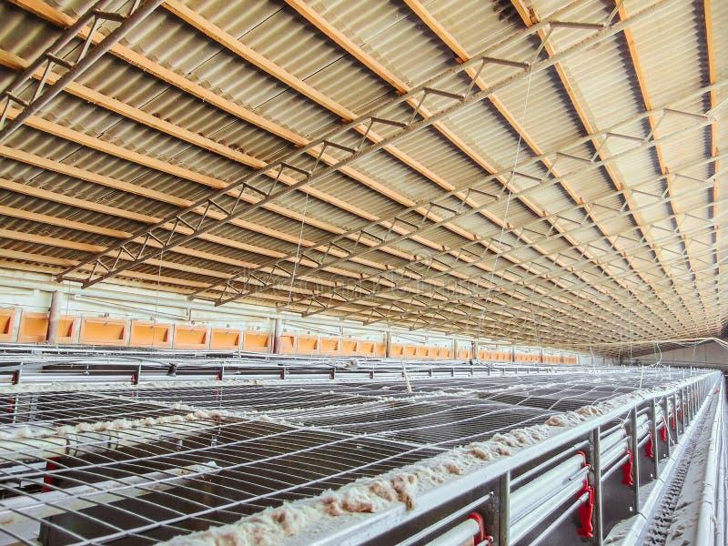 Zaniechana pusta i zatkana linia produkcyjna kurczaków jajka zdjęcie stock