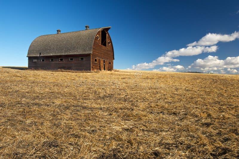 Zaniechana stajnia w zbierającym pszenicznym polu fotografia stock